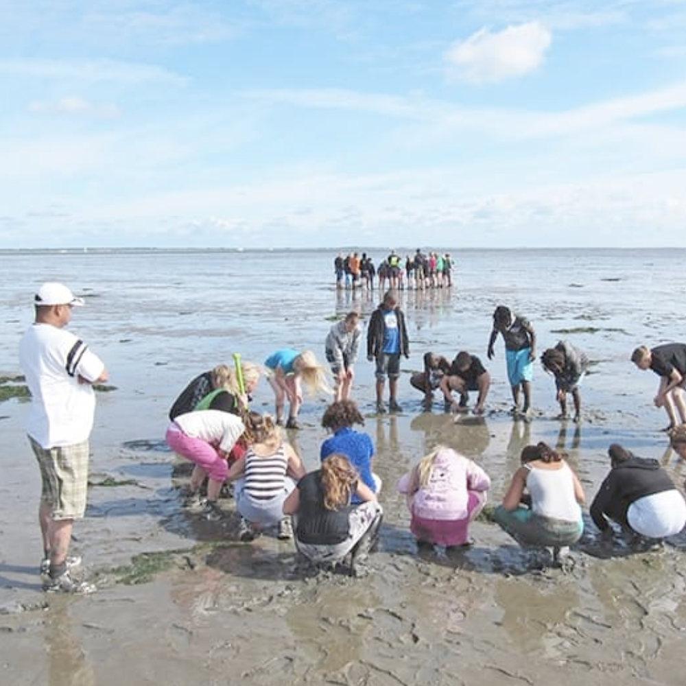 Natuurschool Waddenzee